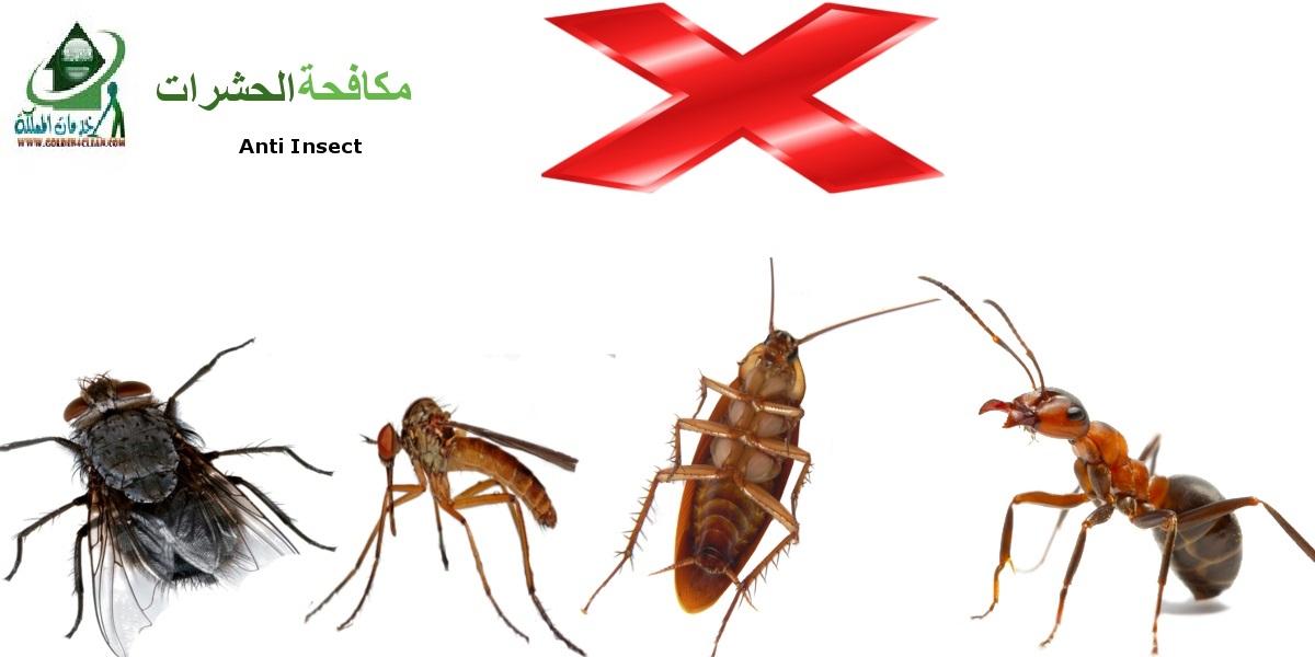 شركة مكافحة حشرات فى خليص