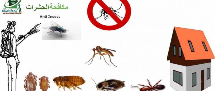 شركة مكافحة حشرات فى ذهبان
