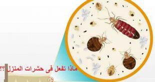 ماذا تفعل في حشرات المنزل؟