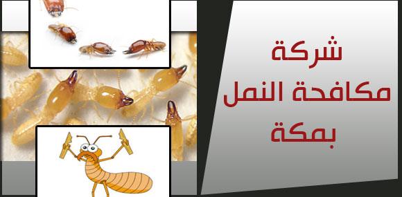 شركة مكافحة النمل بمكة