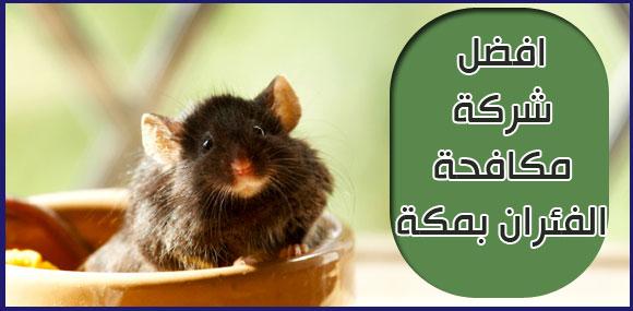 افضل شركة مكافحة الفئران بمكة