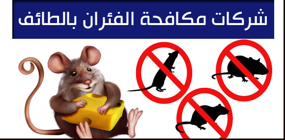 ارخص شركات مكافحة الفئران بالطائف