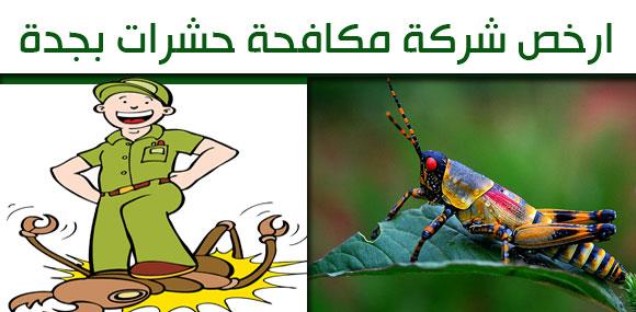 ارخص شركة مكافحة حشرات بجدة