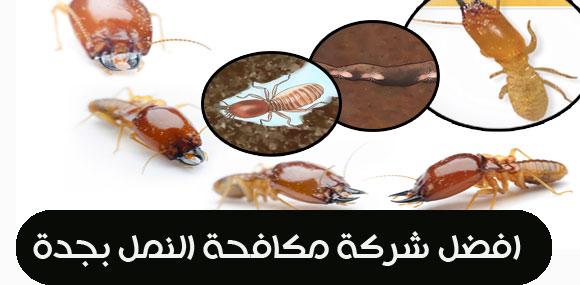 افضل شركة مكافحة النمل بجدة